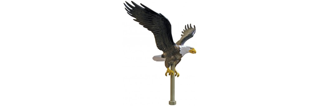 Flagpole Eagles